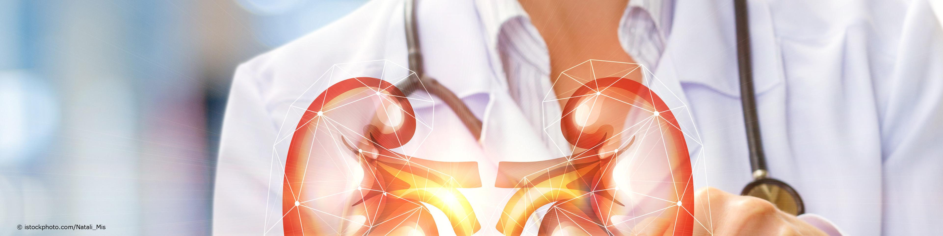 Ein bei DocInsider registrierter Nephrologe, umgangssprachlich Nierenarzt, zeigt ein computeranimiertes 3-D-Modell der menschlichen Nieren.