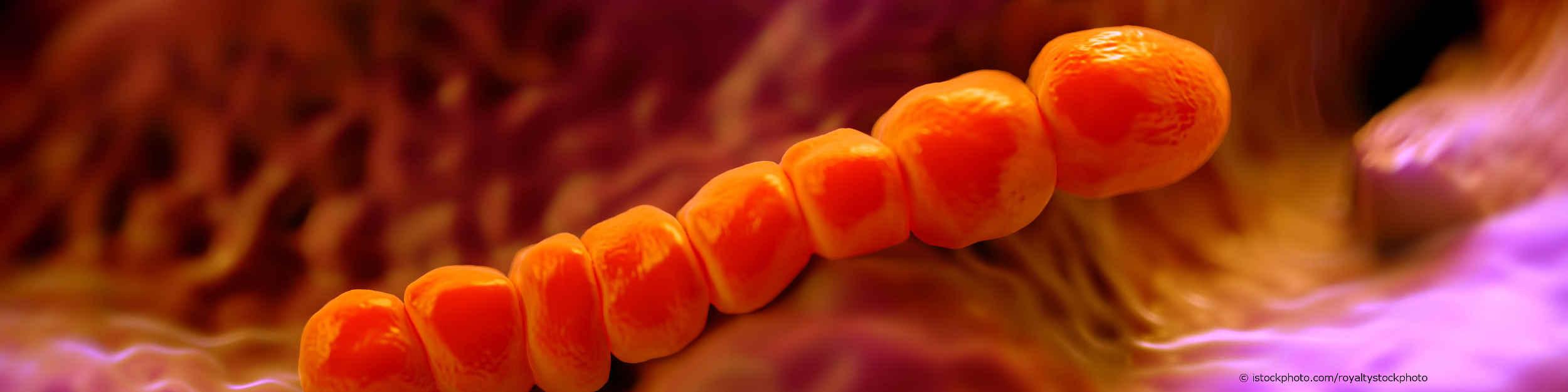 Pneumokokken kommen im Nasen- und Rachenraum des Menschen vor.
