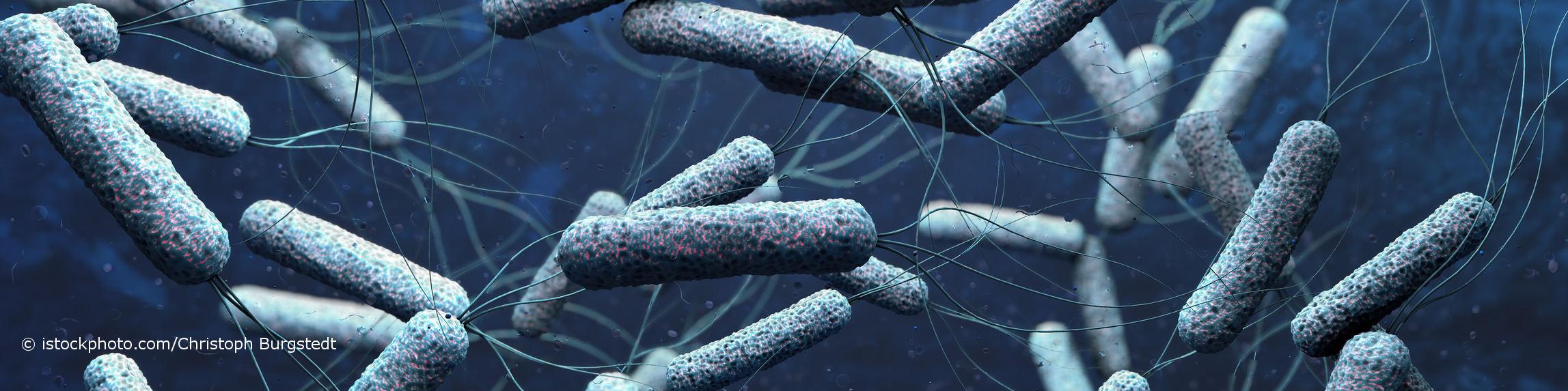 Bestimmte Stämme des Bakteriums Vibrio cholerae können Cholera hervorrufen.