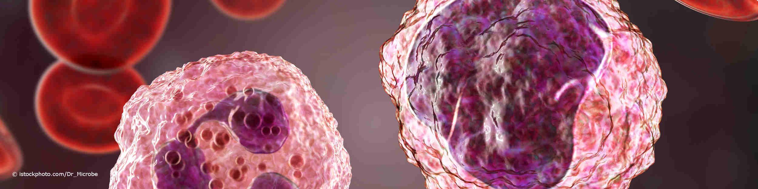 3-D-Illustration eines Monozyten, rechts und eines neutrophilen Granulozyten, umgeben von roten Blutkörperchen